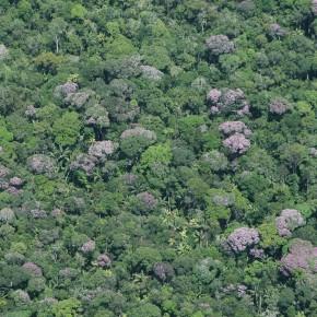 O aquecimento global causará a desertificação da Amazônia?