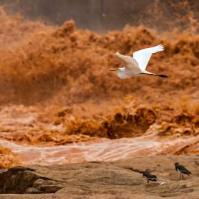 Fotógrafo registra morte do rio Doce