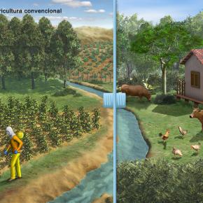 Recurso interativo compara agropecuária convencional com agrofloresta